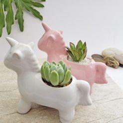 Matera unicornio + Suculenta para regalar